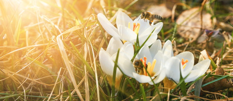 Why spring is the most important season for bugs