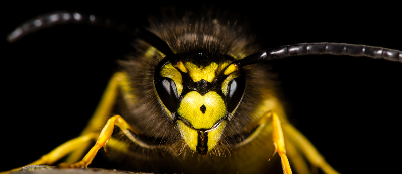 2018: The Year of the Yellowjacket