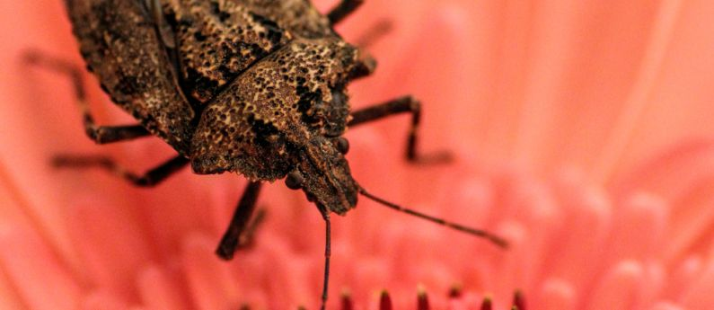 A guest post from Stu the Stink Bug