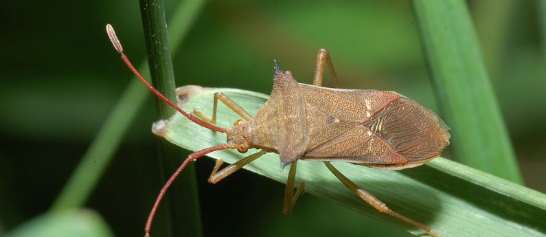 Stink Bugs and you: It's complicated