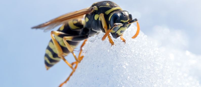 What do insects do in winter?