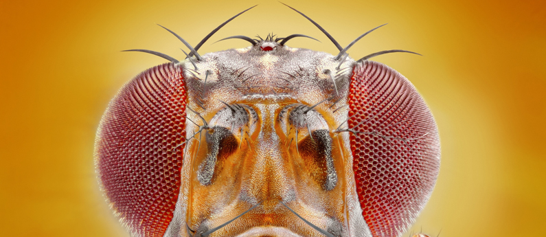 Five fascinating facts about fruit flies