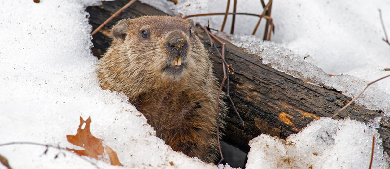 Groundhog Day 2019: Punxsutawney Phil and the Polar Vortex