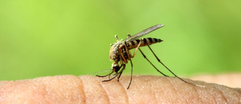 Sterling awarded grant to develop mosquito repellent