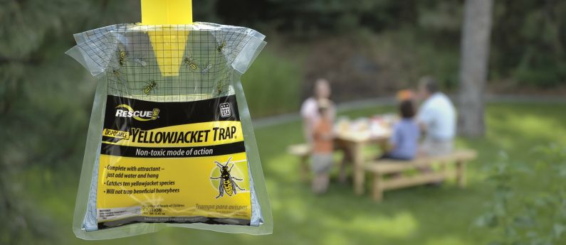 Loving the Disposable Yellowjacket Trap