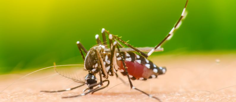 The Three Ds of Mosquito Control
