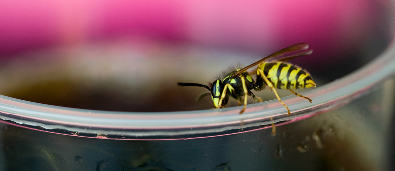 Yellowjackets: DOs and DON'Ts