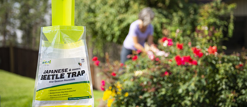 How to use the RESCUE!® Japanese Beetle Trap
