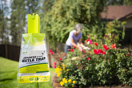 The RESCUE! Japanese Beetle Trap protects your ornamental plants from destructive Japanese Beetles.