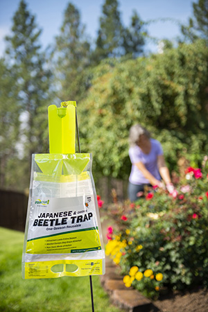 The RESCUE! Japanese Beetle Trap protects your yard from destructive Japanese beetles.
