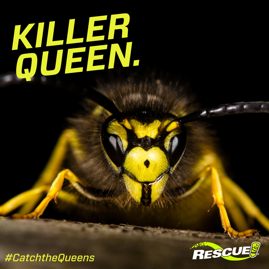 Use the RESCUE! Yellowjacket Trap to catch the queens in spring!