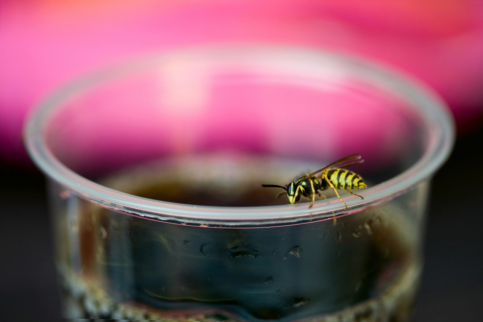 Yellowjackets like sweet liquids, so look before you sip your drink.
